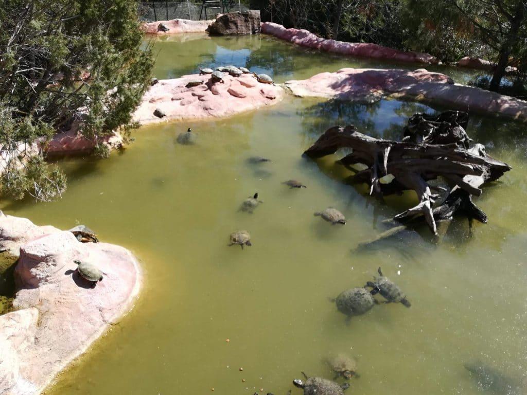 Bassin des tortues aquatiques du village des tortues