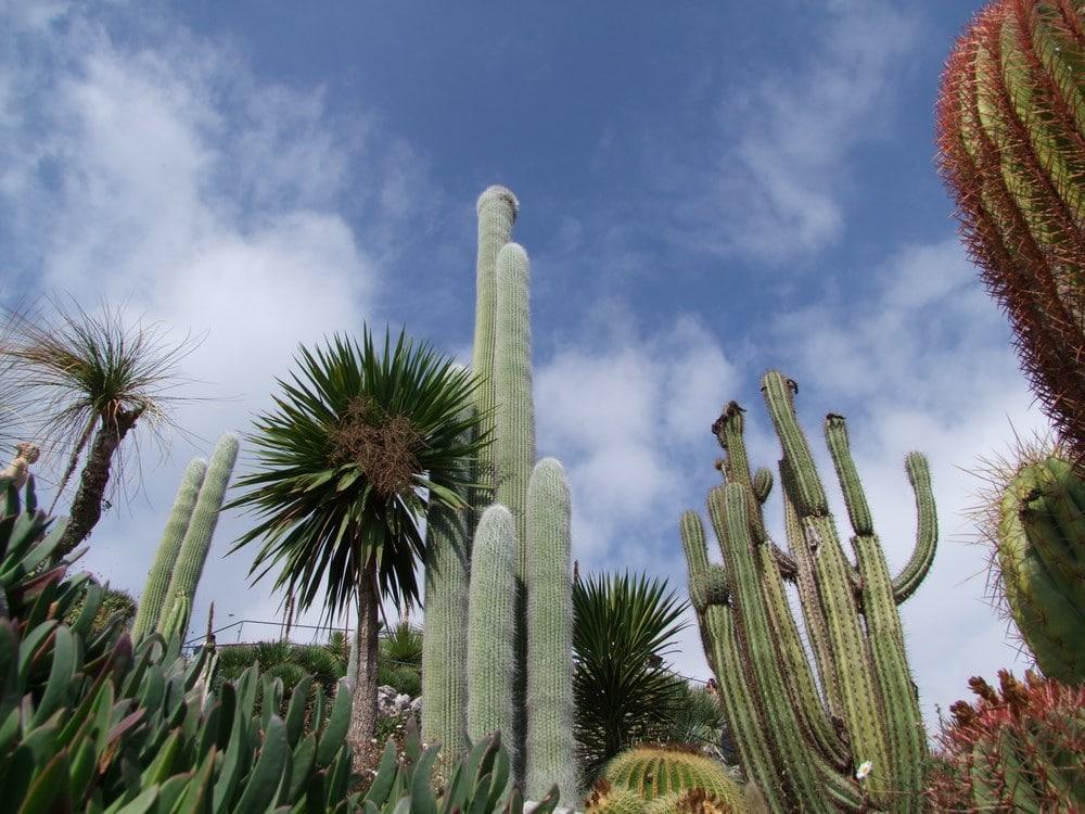 Photo du Jardin exotique d' Eze CRédit Office de tourisme Eze