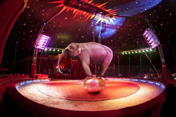 Event-Cirque-de-monaco-iStock