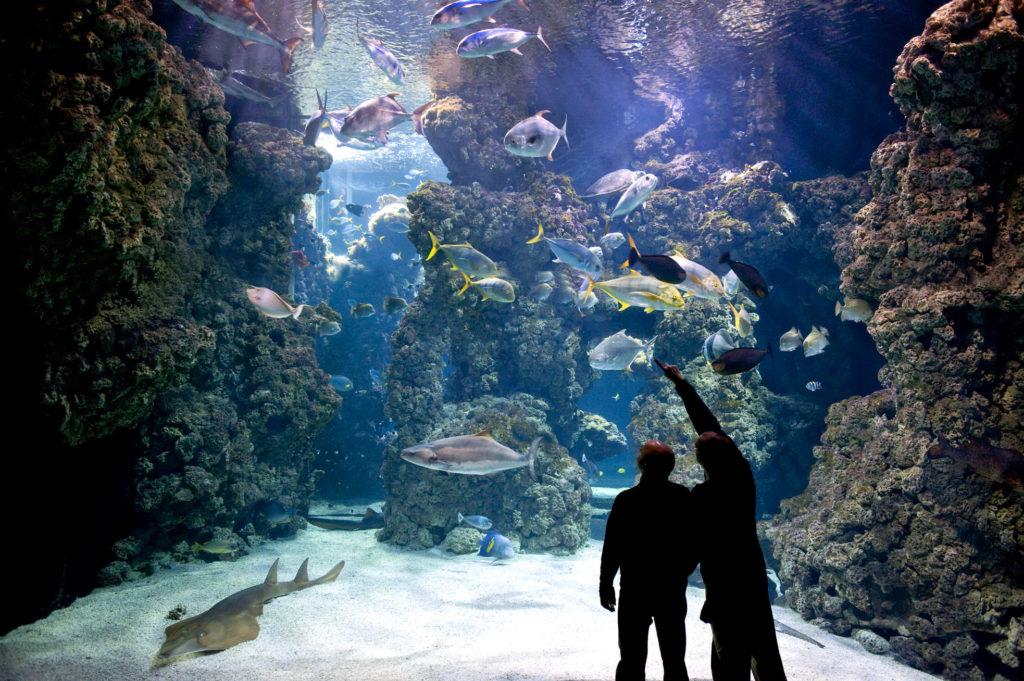 Un des loisirs de la Côte d'azur le Musée océanographique