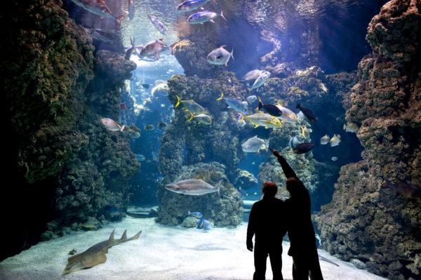 Le lagon des requins