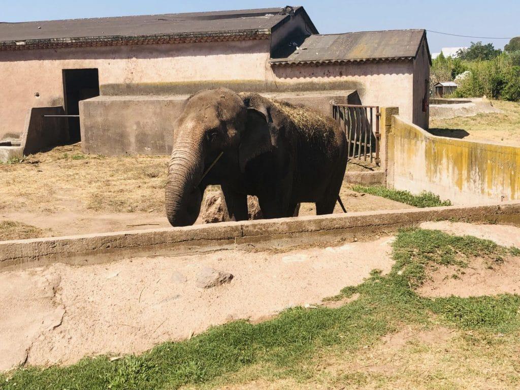 L'éléphant au Parc Zoologique de Fréjus