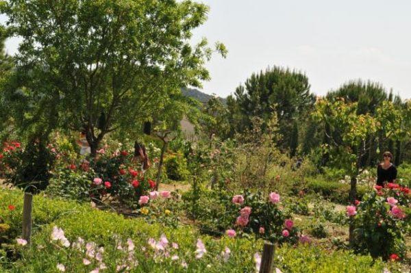 Jardin fleuri de Mouans-Sartoux : le Jardin du MIP