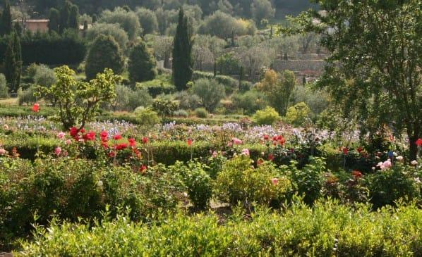 Jardin du MIP : un parcours olfactif