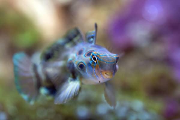 Des espèces terrestres et maritimes