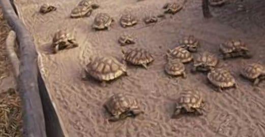 La serre du village des tortues de carnoules