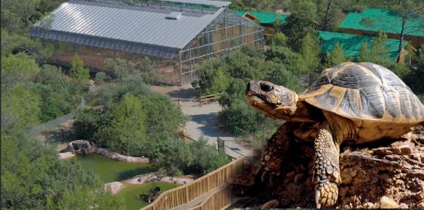Le villages des tortues de carnoules