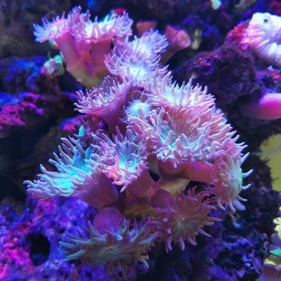 Les Coraux du Musée des océans