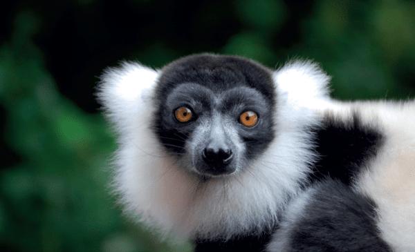 Les 70 espèces d'animaux du Parc Phoenix