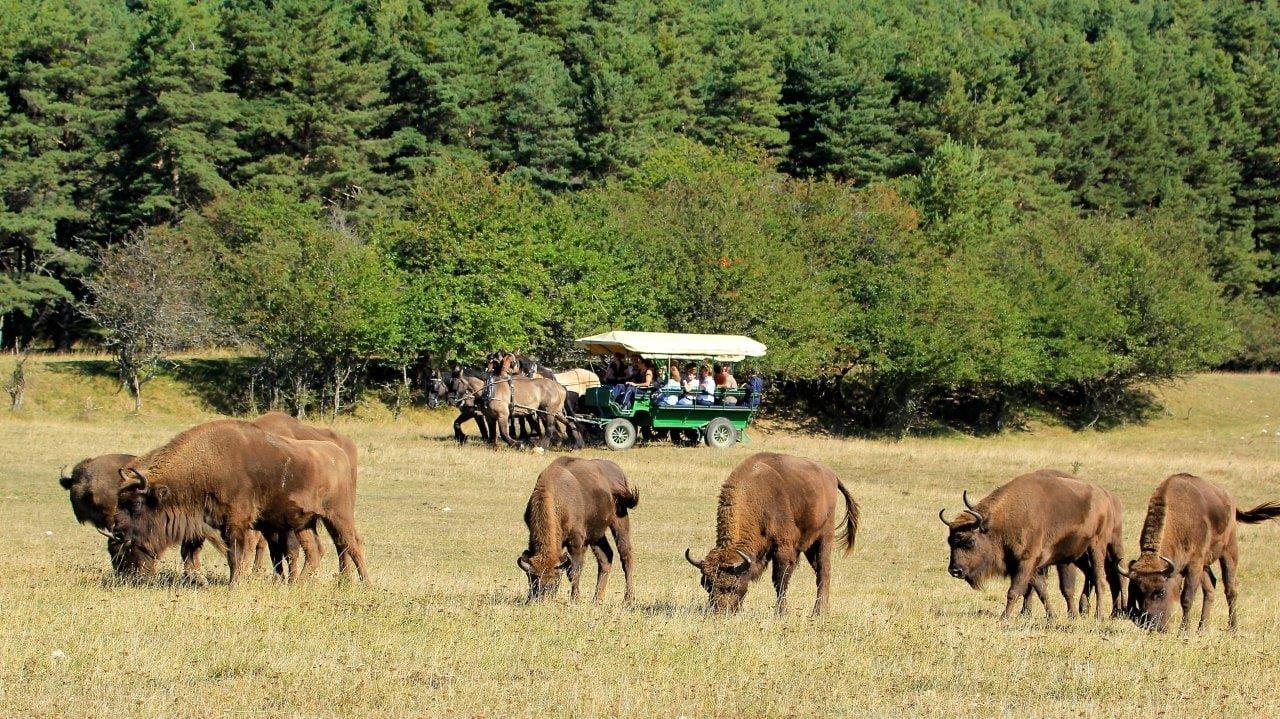 Safari en calèche La Réserve des Monts d'Azur
