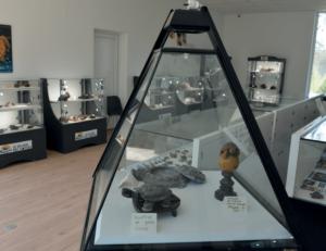 Musée - Tortues - 3.000 objets