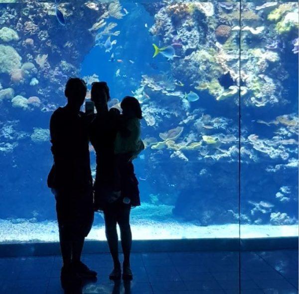 La visite des aquariums géants