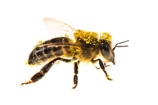 Photo d'insecte par Pierre Escoubas exposée au JMIP