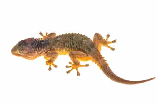Photgraphie d'une reptile par Pierre Escoubas