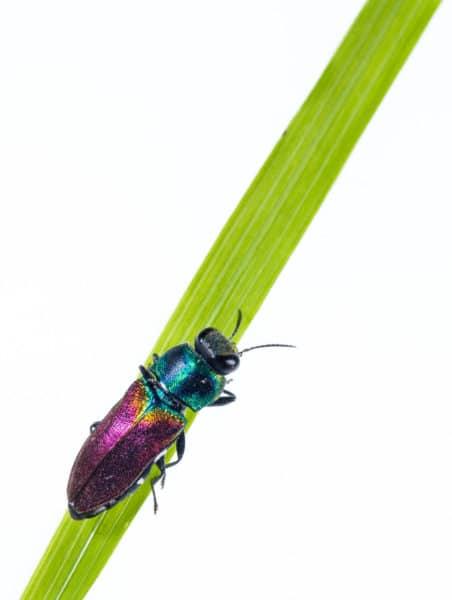 Photo d'insecte capturée par Pierre Escoubas