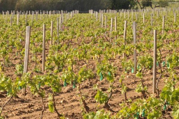 Les vignobles de Croix Valmer - Domaine de la Madrague