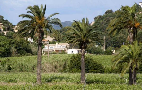 Vue du Domaine de La Madrague