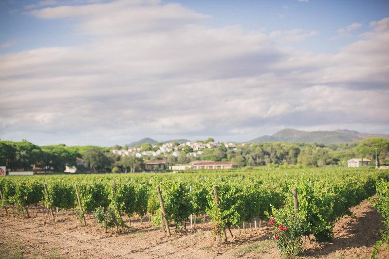 Un domaine viticole d'exception