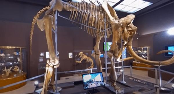 La salle des squelettes au Musée de la préhistoire de Monaco