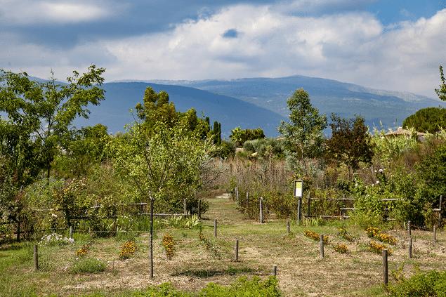 Jardin du MIP
