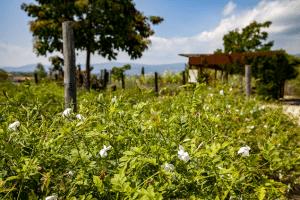 Plantes à parfum, Jardin du MIP