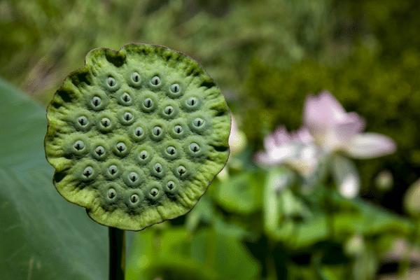 Plantes et fleurs du Jardin du MIP